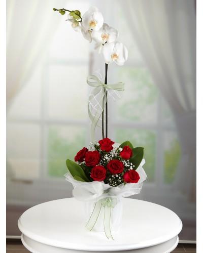 Saksıda Orkide ve Güller